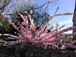 le printemps à Bez